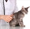 Ветеринарные клиники в Старобалтачево